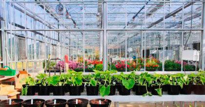 Grow Fresh Organics